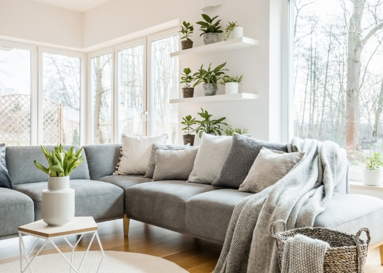 house plants in staged living room